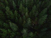 El tiro aéreo del árbol remata en bosque denso Imagenes de archivo