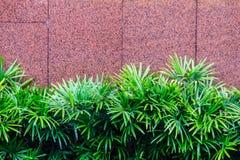 El tiro al aire libre adornó la pared con la palmera verde Tre decorativo Fotos de archivo libres de regalías