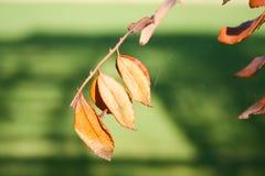 El tiro del otoño - detalle fotos de archivo