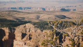 El tiro hermoso del fondo, foco de la cámara va de Mountain View soleado épico de Grand Canyon a poco árbol y parte posterior de  metrajes