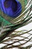 Tiro de la macro de la pluma del pavo real Fotografía de archivo libre de regalías