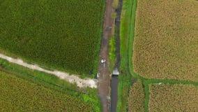 El tiro a?reo de un granjero con un bycile eso se est? moviendo a lo largo de una trayectoria en el medio de un campo grande del  metrajes