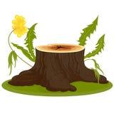 El tocón de árbol marrón grande Fotos de archivo