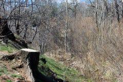 El tocón de árbol y empapa la pendiente al río Fotografía de archivo libre de regalías