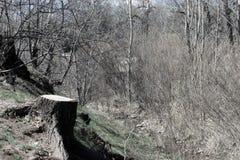 El tocón de árbol y empapa la pendiente al río Fotos de archivo libres de regalías