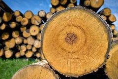 El tocón del árbol derribó - la sección del tronco con los anillos anuales Foto de archivo libre de regalías