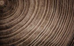 El tocón del árbol derribó - la sección del tronco con los anillos anuales Imagen de archivo libre de regalías