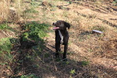 El tomar el sol del perro Fotografía de archivo libre de regalías