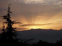 El tomar el sol en belleza Foto de archivo libre de regalías