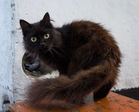 El tomar una siesta cogido gato negro del animal doméstico Fotos de archivo libres de regalías