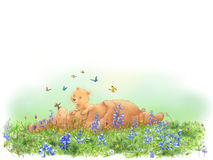 El tomar una siesta con las mariposas Imagen de archivo libre de regalías