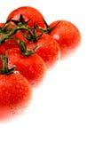 El tomate cubierto de rocio Fotos de archivo libres de regalías