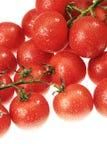El tomate cubierto de rocio Foto de archivo libre de regalías