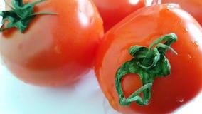 El tomate fresco vierte el agua almacen de metraje de vídeo