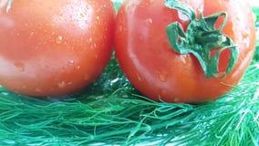 El tomate rojo del eneldo orgánico mojó en los descensos blancos de la cocina del sabor del fondo que salpicaban la comida sana,  almacen de metraje de vídeo