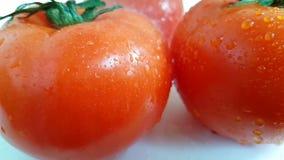 El tomate vierte jugoso dinámico a cámara lenta del agua de la gotita almacen de metraje de vídeo