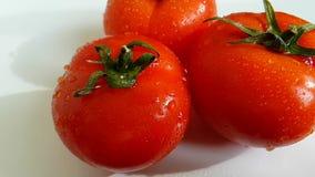 El tomate vierte la cámara lenta del agua almacen de metraje de vídeo