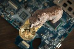 El top abajo lleva con Bitcoin Cryptocurrency en boca en el ordenador M Foto de archivo