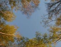 El top de árboles con los jóvenes se va en un fondo del cielo azul Foto de archivo libre de regalías