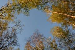 El top de árboles con los jóvenes se va en un fondo del cielo azul Imagen de archivo