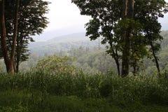 El top de la montaña tropical Imagenes de archivo