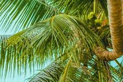 El top de la palmera y del tronco torcido fotografía de archivo libre de regalías