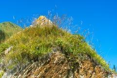 El top de los acantilados anaranjados cubiertos con la hierba y las flores imágenes de archivo libres de regalías
