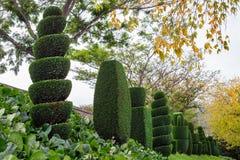 El Topiary formó los árboles, árbol del corte de la horticultura del jardín de Japón imágenes de archivo libres de regalías