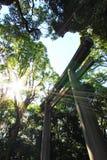 El Torii de madera y el sol Imagen de archivo libre de regalías