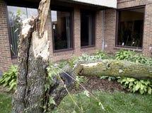 El tornado sopla abajo de un árbol Fotografía de archivo libre de regalías