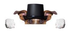 El tostar del perro Fotos de archivo libres de regalías