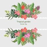 El trópico deja el fondo de los ejemplos del vector de la plantilla de la bandera colorido Imagen de archivo