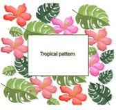 El trópico deja el fondo de los ejemplos del vector del modelo colorido Imagen de archivo libre de regalías