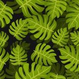 El trópico inconsútil hojea fondo Modelo floral del diseño de la naturaleza del verano Estilo botánico Foto de archivo