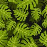 El trópico inconsútil hojea fondo Modelo floral del diseño de la naturaleza del verano Estilo botánico Fotos de archivo libres de regalías