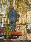 El trabajador corta las ramas del primer del árbol imagenes de archivo