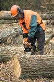 El trabajador de la silvicultura con la motosierra está aserrando un registro Proceso del loggin Fotos de archivo