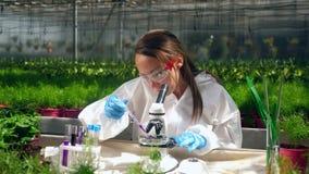 El trabajador del invernadero está utilizando un microscopio para probar las sustancias químicas almacen de video