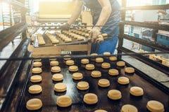 El trabajador en la fábrica de la confitería pone las bandejas con las galletas de la pasta en el soporte especial para cocinar e imagen de archivo