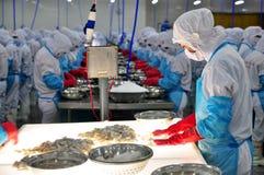 el trabajador está comprobando los camarones procesados color para saber si hay exportar en una fábrica de los mariscos en Vietna Imagen de archivo libre de regalías
