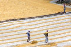 El trabajador tradicional del molino de arroz vuelca el arroz para secarse imagen de archivo