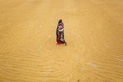 El trabajador tradicional del molino de arroz vuelca el arroz para secarse fotografía de archivo libre de regalías
