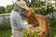 El trabajo de abejas en colmenas es exacto y regulado por un apicultor Imágenes de archivo libres de regalías
