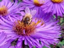 El trabajo de la abeja Foto de archivo