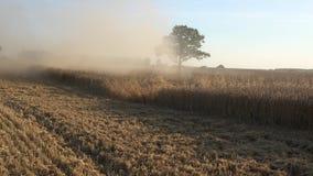 El trabajo de la cosechadora del campo en campo de granja del cereal y hace el polvo 4K metrajes