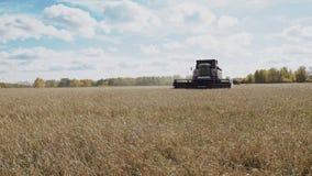 El trabajo de la m?quina segadora en el campo y la trilla del centeno del grano maduro almacen de metraje de vídeo