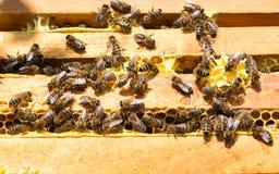 El trabajo de las abejas sobre la miel enmarca la visión superior Imagenes de archivo