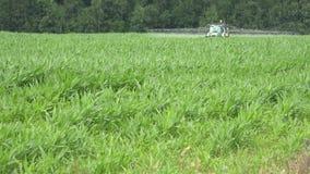 El tractor con la mala hierba de la matanza del rociador y el parásito con las sustancias químicas en maíz colocan 4K almacen de metraje de vídeo