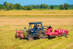 El tractor recoge los sacos con arroz cosechado Imagen de archivo libre de regalías