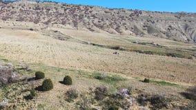 El tractor rojo está cultivando el suelo de la montaña a la primavera joven de los jardines del vinegrape con los árboles de alme almacen de video